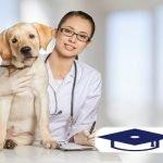 Dicta Tu Vida Con Estas Lecciones Educativas En Formación y Becas 16